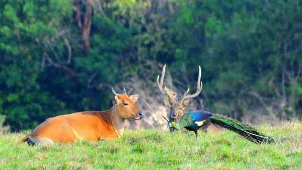 Safari-Taman-Nasional-Alas-Purwo